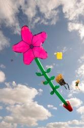 Kite Festivals 2013