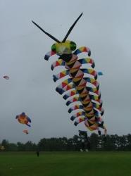 Harrogate 2005