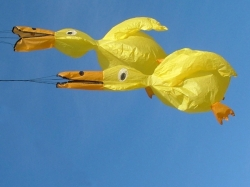 Ducks *