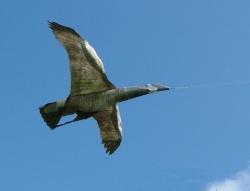 Jackite Canadian Goose