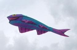 Bolton2006-003